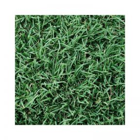 Couch Common Turf  ] 014540 - Flower Power