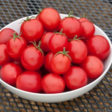 Tomato Cherry Fountain  ] 1673450125 - Flower Power