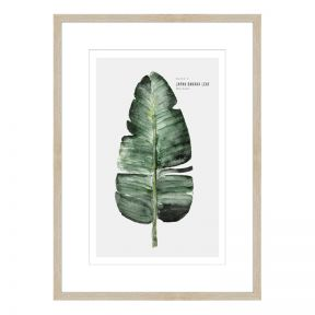 FP Collection Botanist Part 1 Canvas Wall Art