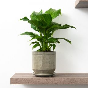 FP Collection Pattaya Planter