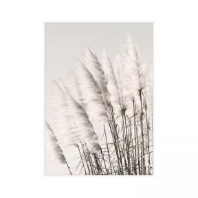 FP Collection Pampus Grass Canvas Wall Art