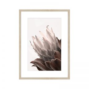 FP Collection Protea 1 Canvas Wall Art