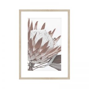 FP Collection Protea 2 Canvas Wall Art