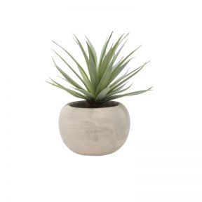 FP Collection Artificial Airplant Tillandsia in Pot