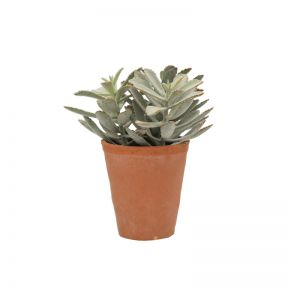 FP Collection Artificial Kalanchoe Pot