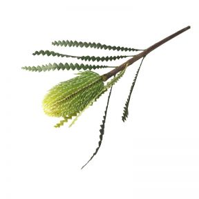 FP Collection Artificial Banksia Stem Green