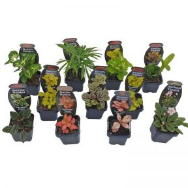 Bottle Babies Assorted Indoor Plant  ] 187227 - Flower Power