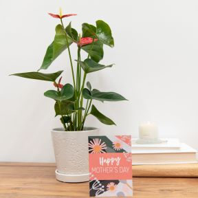Growing Gift Mother's Day Limited Edition A  ] 190274 - Flower Power