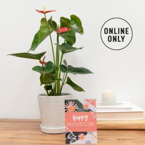 Growing Gift Mother's Day Limited Edition A