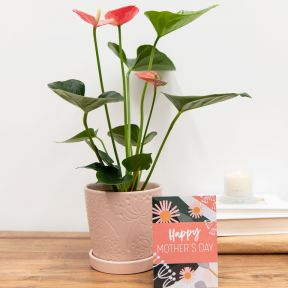 Growing Gift Mother's Day Limited Edition B  ] 190275 - Flower Power