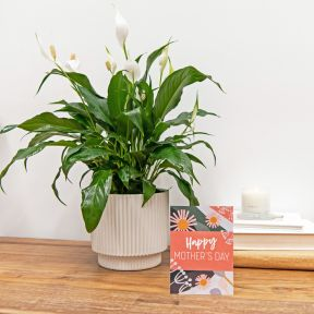 Growing Gift Mother's Day Limited Edition C  ] 190277 - Flower Power