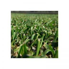 Buffalo Shade Master Turf  ] 482180 - Flower Power