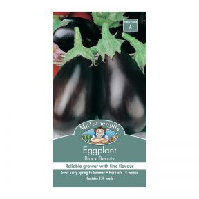 Mr Fothergill's Eggplant Black Beauty