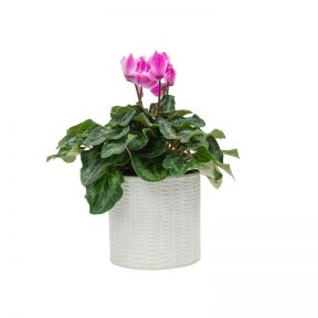 Living Trends Ceramic Dash Silver Planter