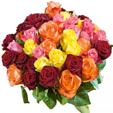 Rose - Bagged  ] 9342229000029 - Flower Power