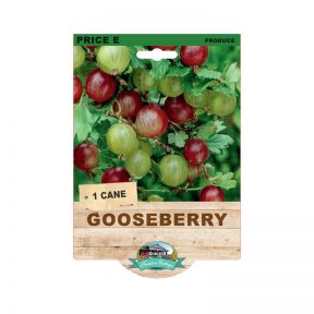 Gooseberry Thornless  No] 9315774073619 - Flower Power