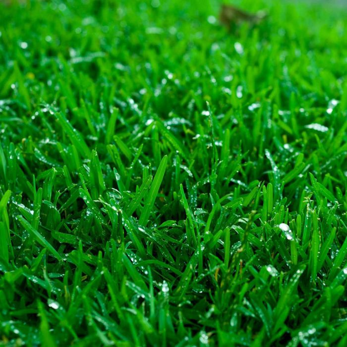 Couch Winter Green Turf color No 016620