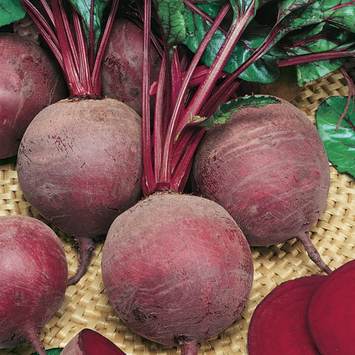 Beetroot color No 1362601006P