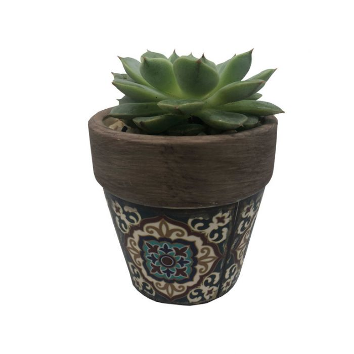 Living Trends Mini Potted Succulent color No 1734979999