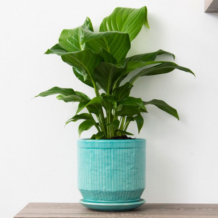 FP Collection Pattaya Planter color No 177057