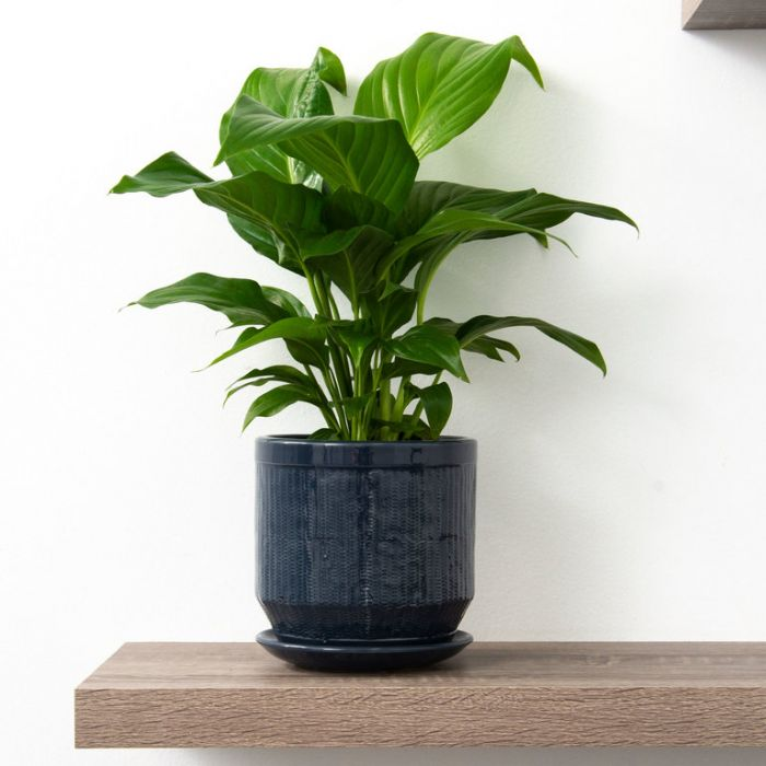 FP Collection Pattaya Planter color No 177058