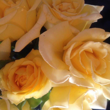 Helmut Schmidt Rose color No 3629600200P