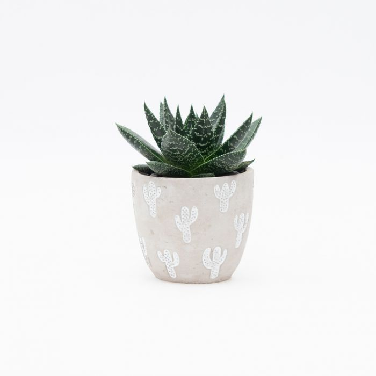 Living Trends Cactus Planter  No] 9015919999 - Flower Power