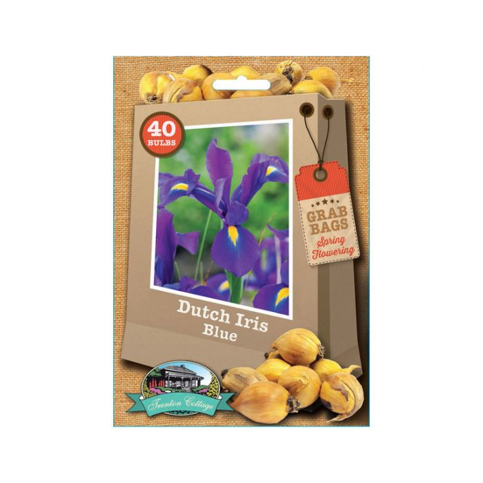 Dutch Iris Blue  No] 9315774070441 - Flower Power