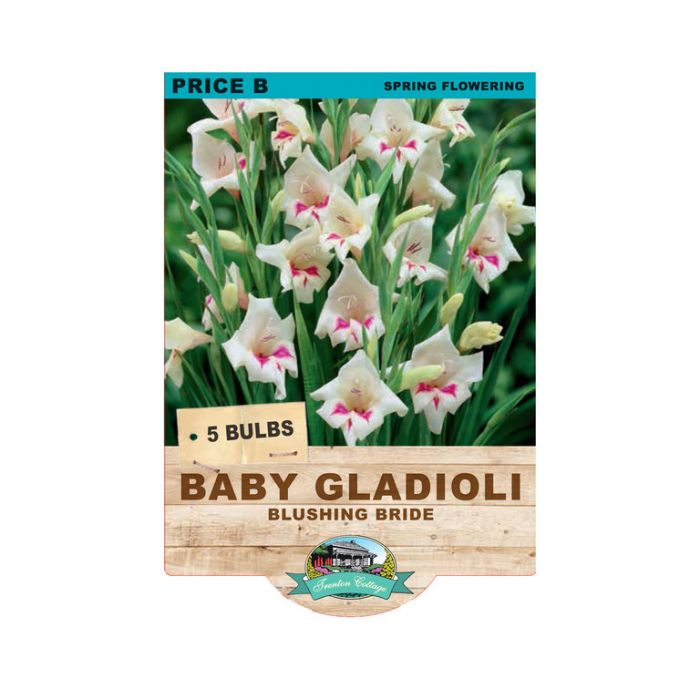 Baby Gladioli Blush Bride color No 9315774070847