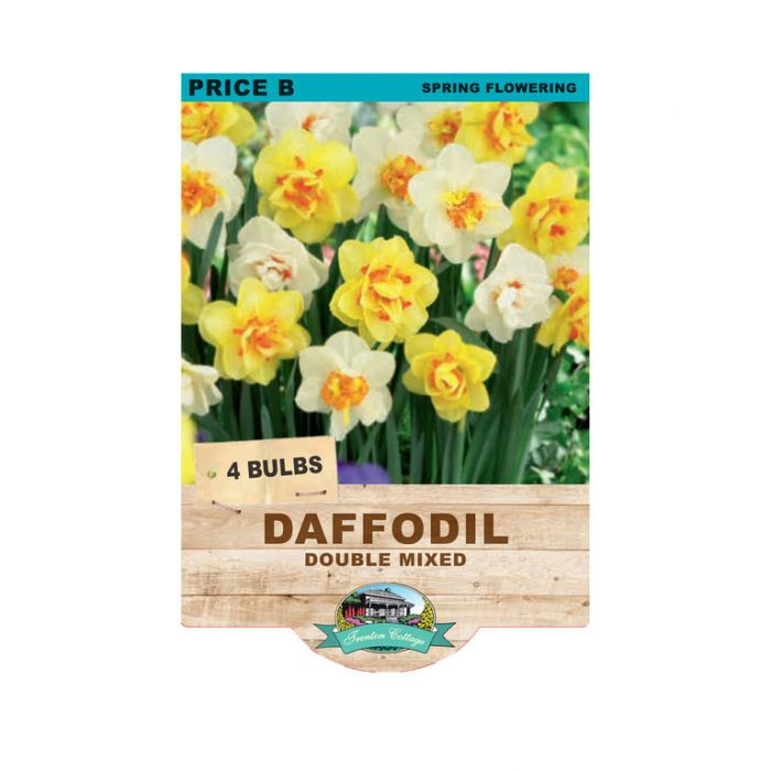 Daffodil Double Mixed  No] 9315774070908 - Flower Power