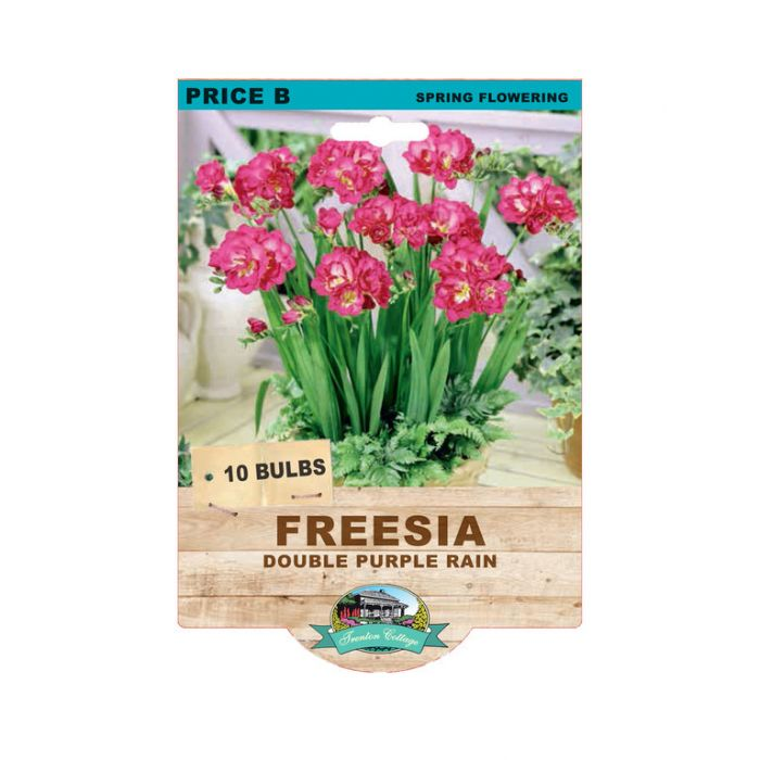 Freesia Double Purple Rain  No] 9315774073398 - Flower Power