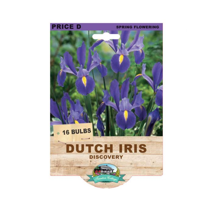 Dutch Iris Discovery  No] 9315774073459 - Flower Power