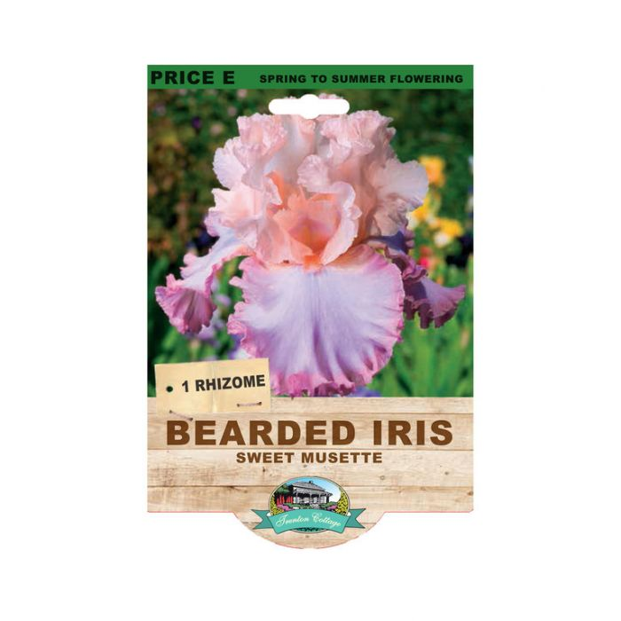 Bearded Iris Sweet Musette color No 9315774073534