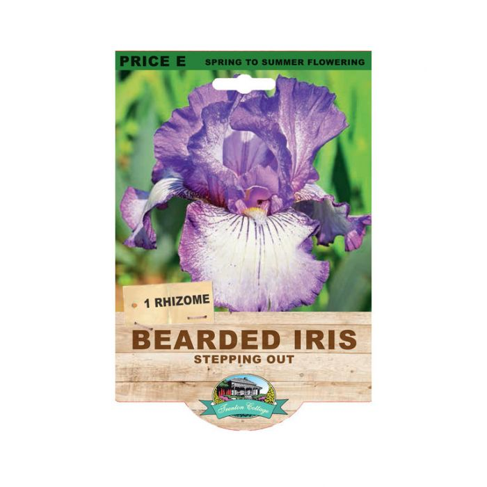Bearded Iris Stepping Out  No] 9315774073558 - Flower Power