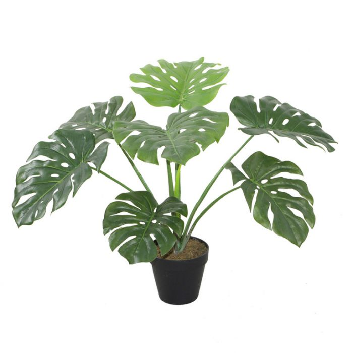FP Collection Artificial Monstera  ] 164391 - Flower Power