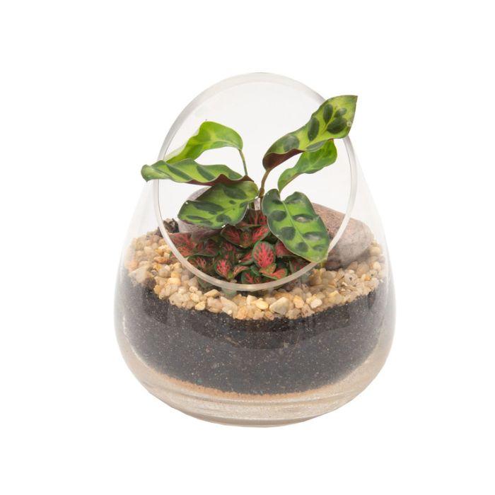 Living Trends Diagonal Cut Glass Terrarium  ] 1671529999P - Flower Power