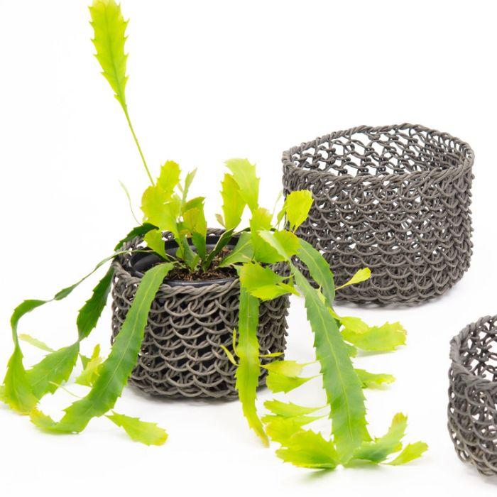 Lepismium Houlletian Hanging Basket  ] 167704P - Flower Power