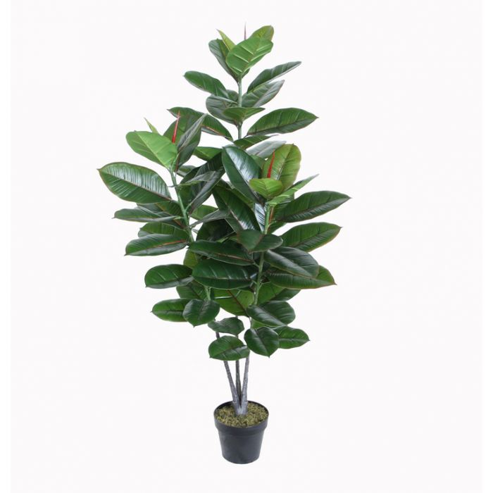FP Collection Artificial Rubber Plant  ] 168564 - Flower Power