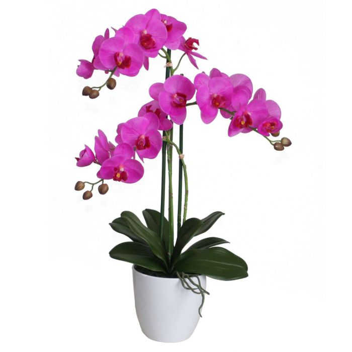 FP Collection Artificial Orchid  ] 174111 - Flower Power