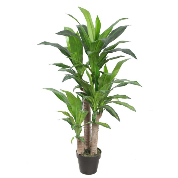 FP Collection Artificial Dracaena  ] 175048P - Flower Power