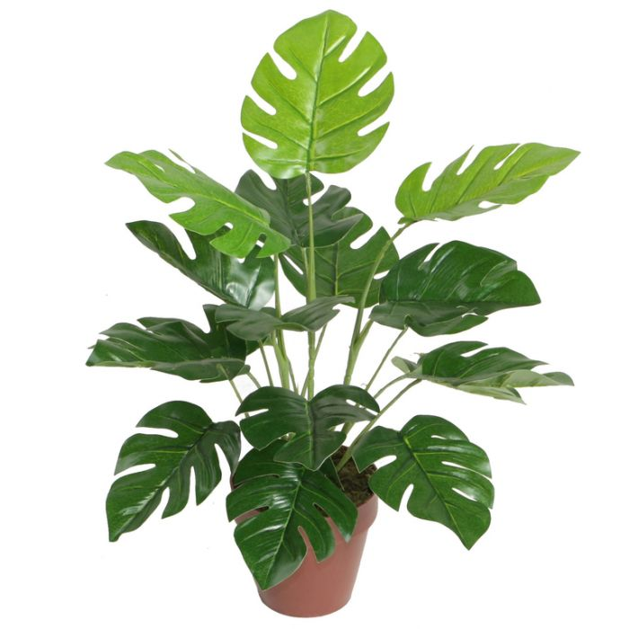 FP Collection Artificial Monstera  ] 176503 - Flower Power