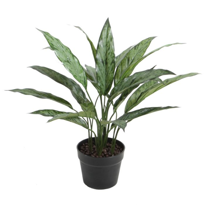 FP Collection Artificial Dracaena  ] 176507 - Flower Power