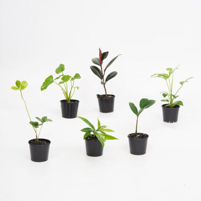 Assorted Indoor Starter Plants  ] 176608 - Flower Power