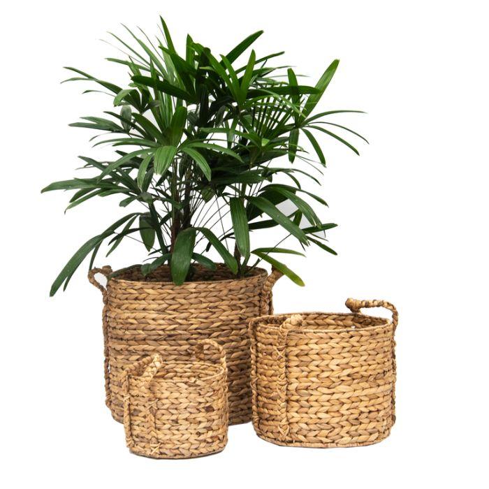 FP Collection Oscar Planter Basket  ] 182036P - Flower Power