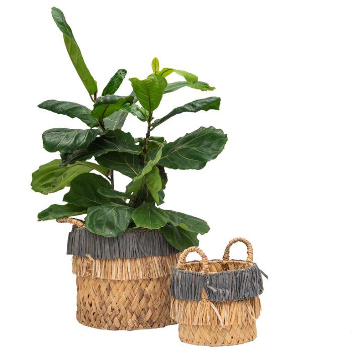 FP Collection Portofino Planter Basket  ] 182088P - Flower Power