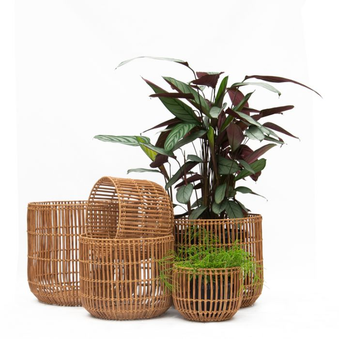 FP Collection Campbell Planter Basket  ] 182104P - Flower Power