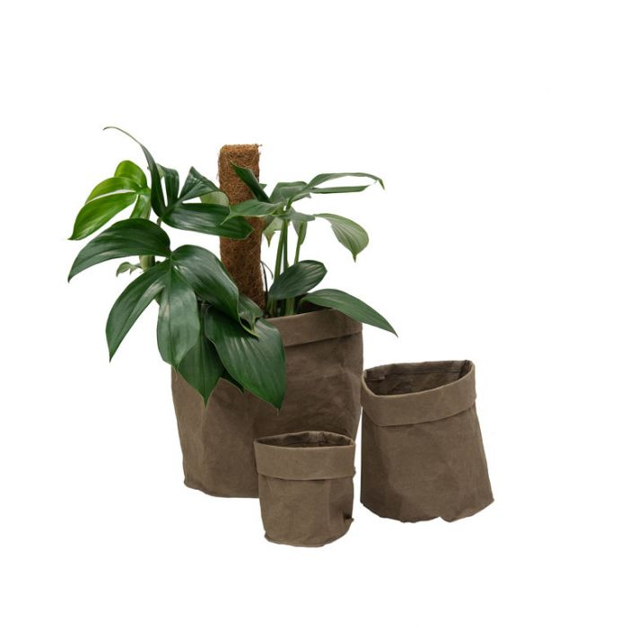 FP Collection Brooklyn Pot Bag Khaki  ] 182653P - Flower Power