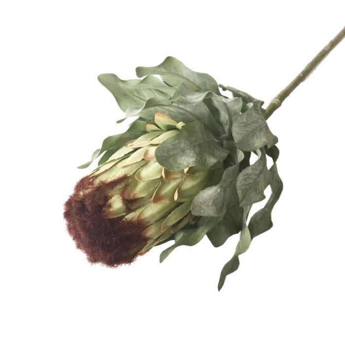 FP Collection Artificial Protea Limelight Stem Green  ] 182685 - Flower Power