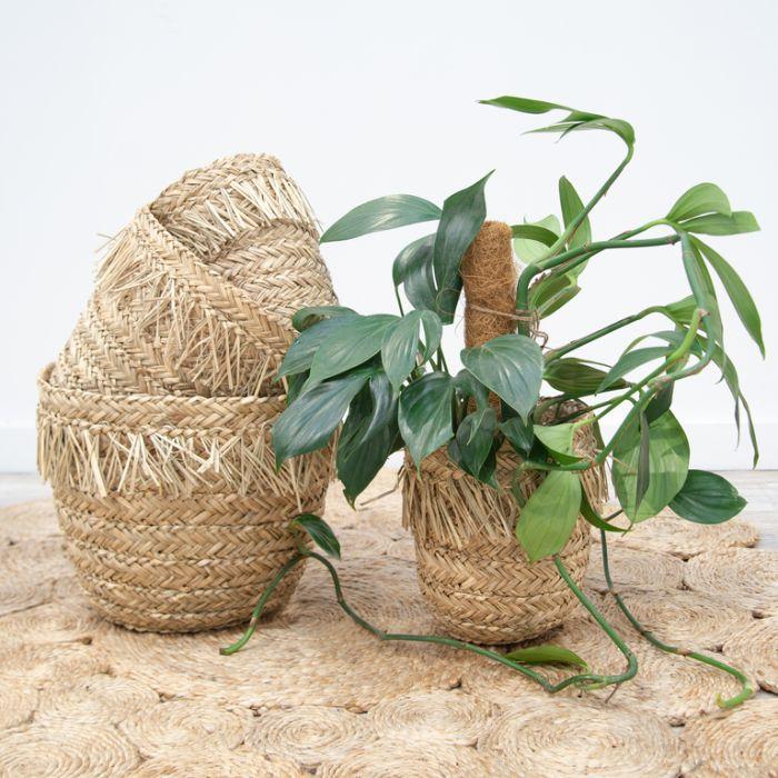FP Collection Oáhu Basket  ] 184147P - Flower Power