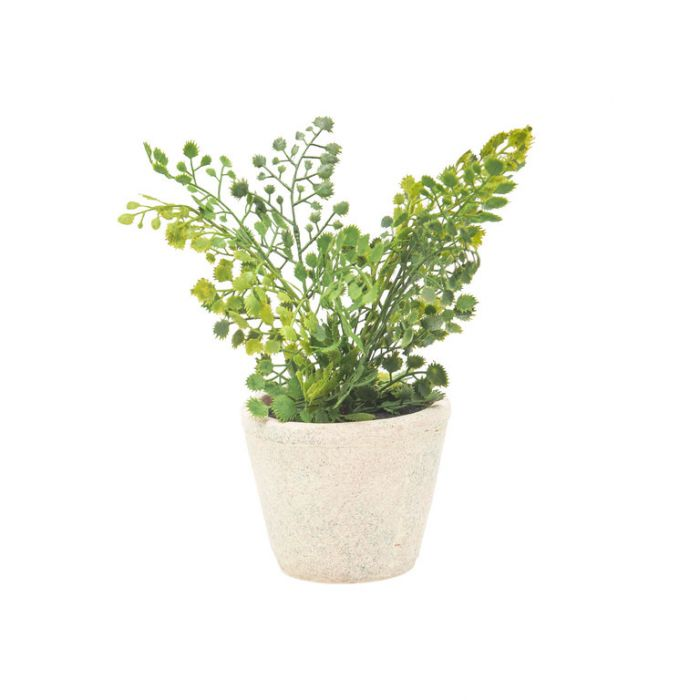 FP Collection Artificial Potted Maiden Fern  ] 184490 - Flower Power